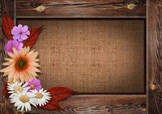 Schöner Herbsthintergrund mit Holzrahmen und Blumen können an Lizenzfreie Stockbilder