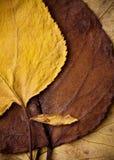 Schöner Herbstlaub Stockfotografie