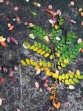 Schöner Herbstlaub Stockbilder