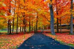 Schöner Herbstlaub in den Nordost-USA lizenzfreie stockfotos
