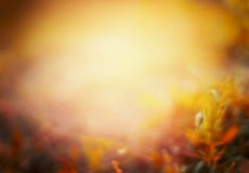 Schöner Herbstnaturhintergrund auf Fallgarten oder -park Lizenzfreie Stockfotografie