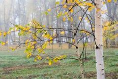 Schöner Herbstnaturzustand lizenzfreies stockbild