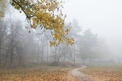 Schöner Herbstnaturzustand stockfotos