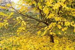 Schöner Herbstnaturzustand lizenzfreie stockbilder