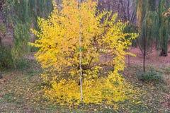 Schöner Herbstnaturzustand stockfoto