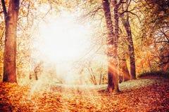 Schöner Herbstpark mit gefallenen Blättern, Herbstlaub und Sonnenstrahlen Stockfotografie