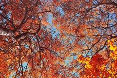 Schöner Herbsttag Lizenzfreie Stockfotos
