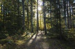 Schöner Herbsttag im Wald in Schweden Skandinavien stockbilder