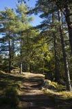 Schöner Herbsttag im Wald in Schweden Skandinavien lizenzfreie stockbilder