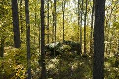 Schöner Herbsttag im Wald in Schweden Skandinavien stockfotografie
