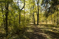 Schöner Herbsttag im Wald in Schweden Skandinavien stockfotos
