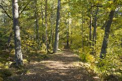 Schöner Herbsttag im Wald in Schweden Skandinavien lizenzfreies stockfoto