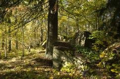 Schöner Herbsttag im Wald in Schweden Skandinavien lizenzfreie stockfotos