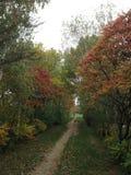 Schöner Herbstwald Lizenzfreies Stockfoto