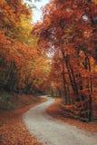 Schöner Herbstwaldgebirgsweg Lizenzfreie Stockfotografie