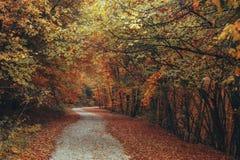 Schöner Herbstwaldgebirgsweg Lizenzfreies Stockbild