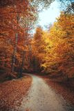 Schöner Herbstwaldgebirgsweg Stockfoto