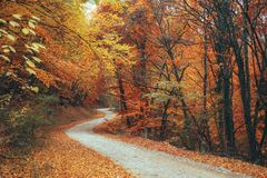 Schöner Herbstwaldgebirgsweg Stockbild