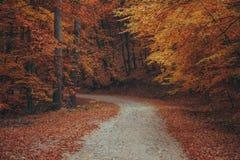 Schöner Herbstwaldgebirgsweg Stockfotos