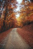 Schöner Herbstwaldgebirgsweg Lizenzfreie Stockfotos