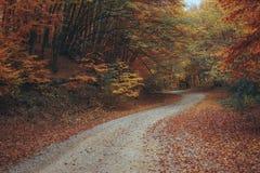 Schöner Herbstwaldgebirgsweg Lizenzfreies Stockfoto