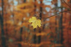 Schöner Herbstwaldgebirgsweg Stockfotografie