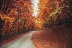 Schöner Herbstwaldgebirgsweg Lizenzfreie Stockbilder