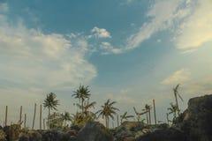 Schöner Himmel- und Baumvektor stockfotografie