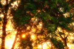 Schöner Himmel- und Baumvektor Stockfoto