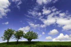 Schöner Himmel- und Baumvektor Lizenzfreies Stockbild
