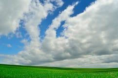 Schöner Himmel und grünes Feld Stockfotos