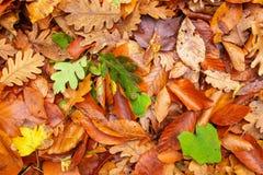 Schöner Hintergrund des gefallenen Herbstlaubs lizenzfreie stockbilder