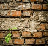 schöner Hintergrund gemacht von den alten Ziegelsteinen Lizenzfreie Stockfotografie
