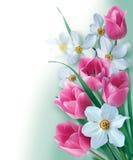 Schöner Hintergrund mit Frühlingsblumen Lizenzfreie Stockfotografie