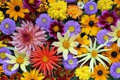 Schöner Hintergrund von verschiedenen Herbstblumen Abbildung kann für verschiedene Zwecke benutzt werden Lizenzfreie Stockbilder