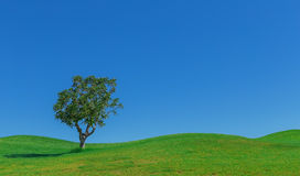 Schöner Hintergrund von Wiesen und von Himmelbaum Stockfoto