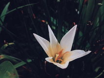 Schöner Hintergrund weiße Blume Stockfotografie