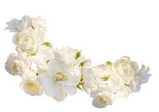 Schöner horizontaler Rahmen mit Blumenstrauß von den weißen Rosen mit Regentropfen lokalisiert auf weißem Hintergrund Stockfotografie