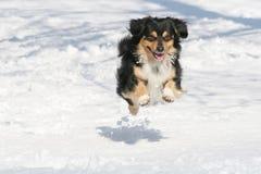 Schöner Hund Lizenzfreie Stockfotos