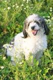 Schöner Hund Stockbild
