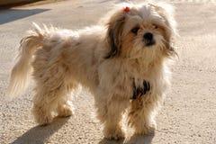 Schöner Hund Lizenzfreie Stockbilder