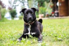 Schöner Hund lizenzfreie stockfotografie
