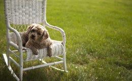 Schöner Hund auf einem weißen geflochtenen Stuhl stockbild
