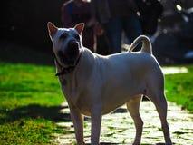 Schöner Hund in der Natur Stockfotografie