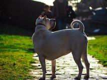 Schöner Hund in der Natur Stockfotos