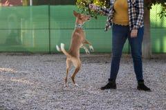 Schöner Hund, der in Park spielt und springt lizenzfreie stockfotos