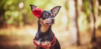 Schöner Hund, ein Welpe in a in einem Blumenkranz stockbild