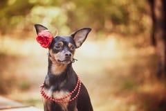 Schöner Hund, ein Welpe in a in einem Blumenkranz lizenzfreies stockfoto