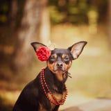 Schöner Hund, ein Welpe in a in einem Blumenkranz, der auf einer Rückseite sitzt lizenzfreies stockbild