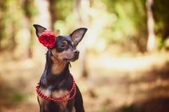 Schöner Hund, ein Welpe in a in einem Blumenkranz, der auf einem Hintergrund sitzt lizenzfreie stockfotos